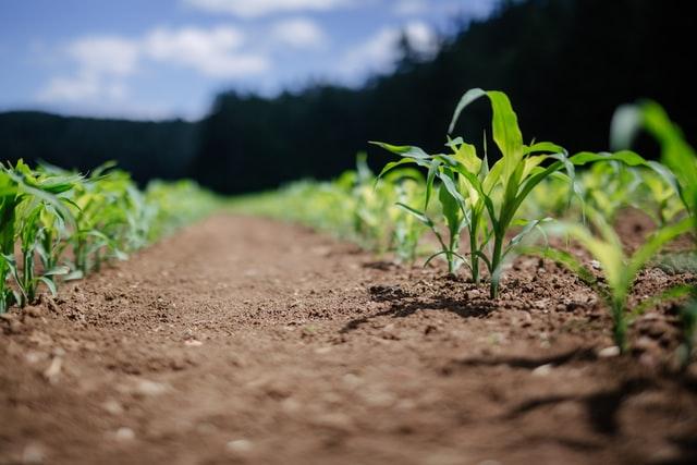 Skuteczna ochrona roślin uprawnych